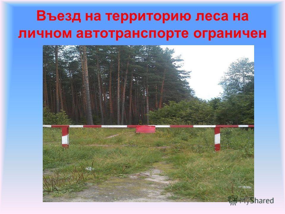 Въезд на территорию леса на личном автотранспорте ограничен