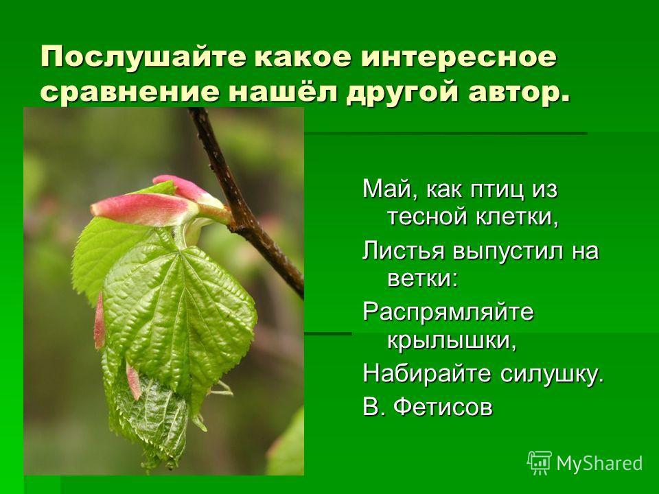 Послушайте какое интересное сравнение нашёл другой автор. Май, как птиц из тесной клетки, Листья выпустил на ветки: Распрямляйте крылышки, Набирайте силушку. В. Фетисов