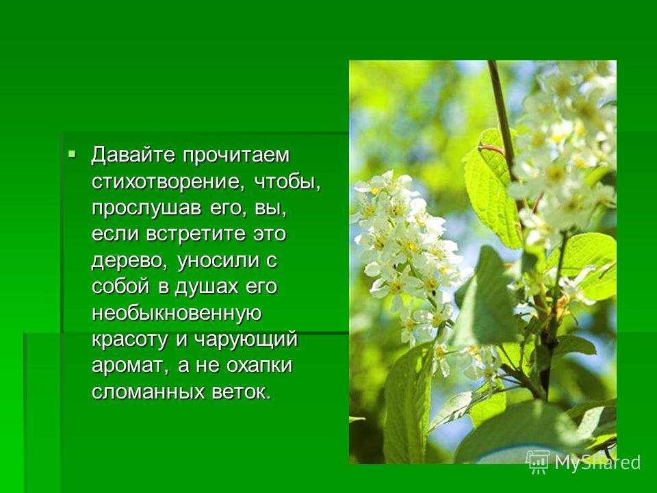 Давайте прочитаем стихотворение, чтобы, прослушав его, вы, если встретите это дерево, уносили с собой в душах его необыкновенную красоту и чарующий аромат, а не охапки сломанных веток. Давайте прочитаем стихотворение, чтобы, прослушав его, вы, если в