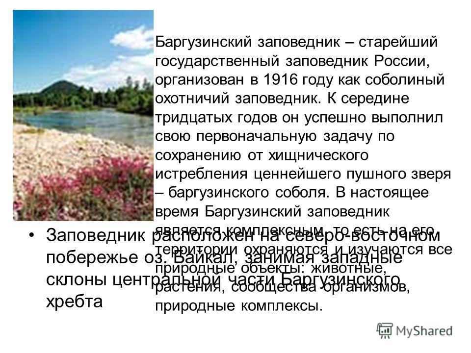 Баргузинский заповедник – старейший государственный заповедник России, организован в 1916 году как соболиный охотничий заповедник. К середине тридцатых годов он успешно выполнил свою первоначальную задачу по сохранению от хищнического истребления цен