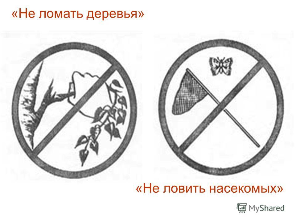 «Не ломать деревья» «Не ловить насекомых»