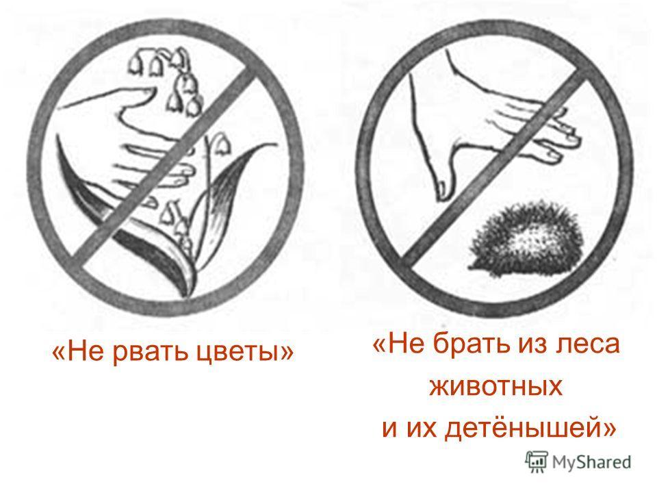 «Не брать из леса животных и их детёнышей» «Не рвать цветы»