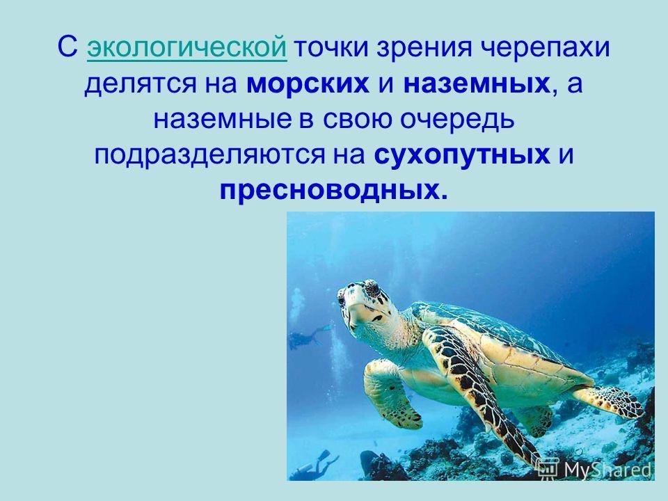 С экологической точки зрения черепахи делятся на морских и наземных, а наземные в свою очередь подразделяются на сухопутных и пресноводных.экологической