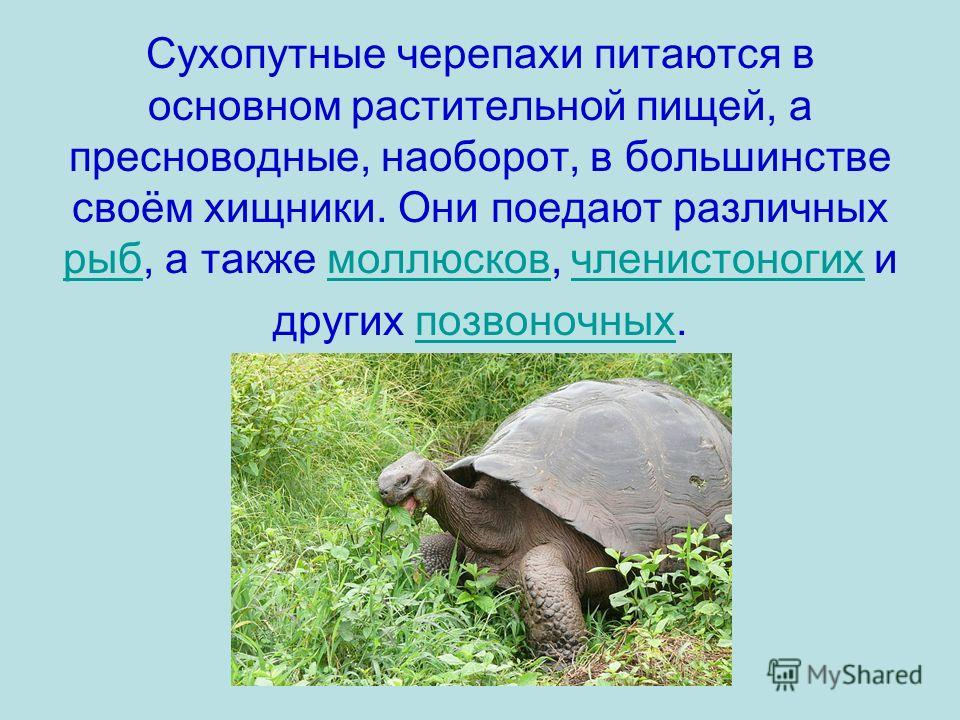 Сухопутные черепахи питаются в основном растительной пищей, а пресноводные, наоборот, в большинстве своём хищники. Они поедают различных рыб, а также моллюсков, членистоногих и других позвоночных. рыбмоллюсковчленистоногихпозвоночных