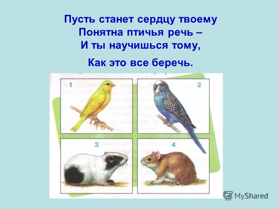 Пусть станет сердцу твоему Понятна птичья речь – И ты научишься тому, Как это все беречь.