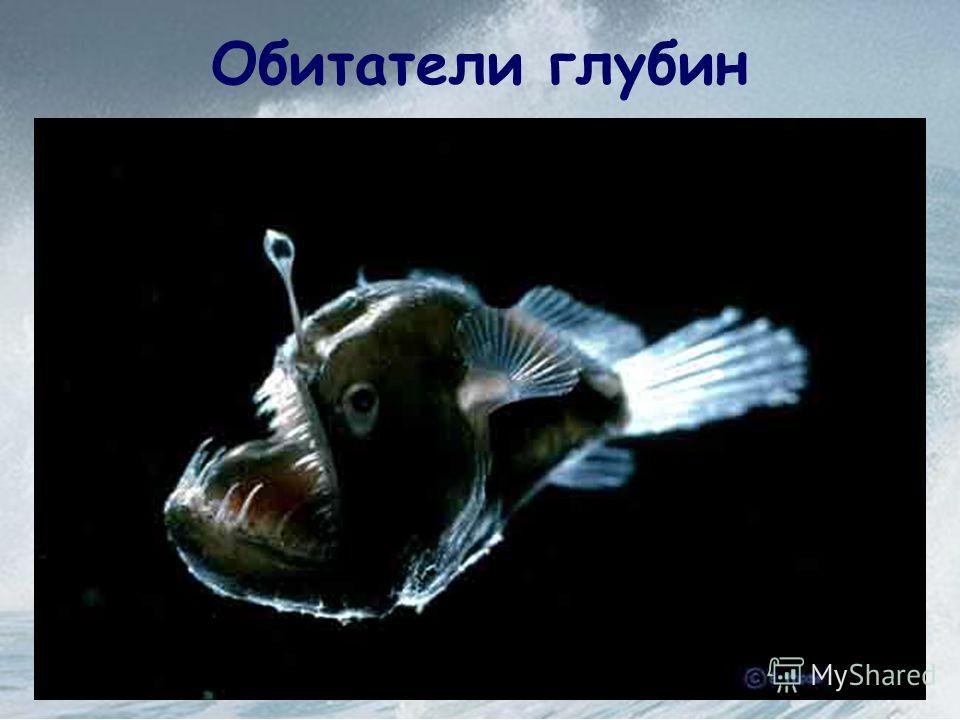 Распространение жизни в океане От чего зависит? 1. Свет 2. Температура 3. Содержания кислорода в воде 4. Питательных веществ