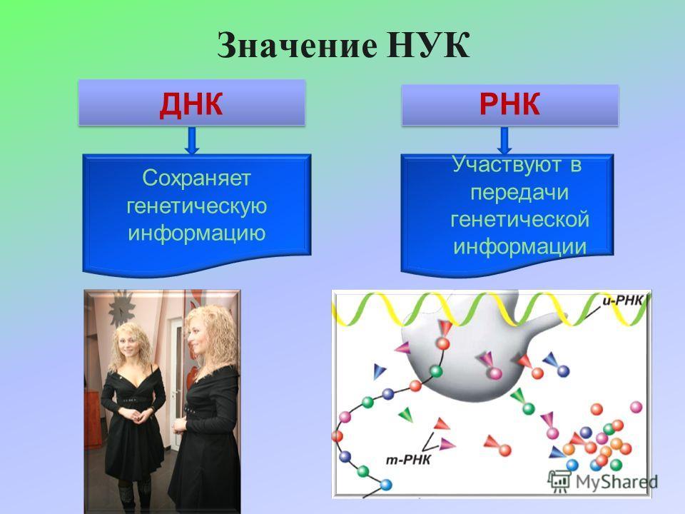 Значение НУК ДНК РНК Сохраняет генетическую информацию Участвуют в передачи генетической информации