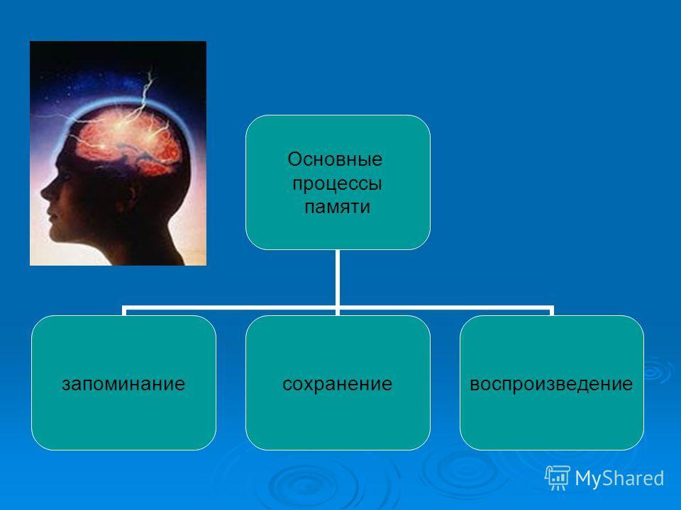 Основные процессы памяти запоминаниесохранениевоспроизведение