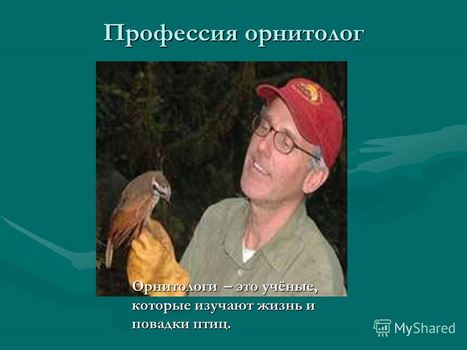 Профессия орнитолог Орнитологи – это учёные, которые изучают жизнь и повадки птиц.