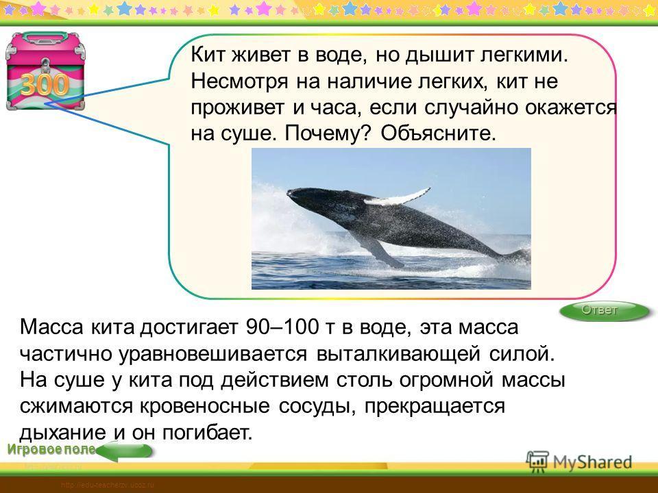 Игровое поле Ответ http://edu-teacherzv.ucoz.ru Масса кита достигает 90–100 т в воде, эта масса частично уравновешивается выталкивающей силой. На суше у кита под действием столь огромной массы сжимаются кровеносные сосуды, прекращается дыхание и он п