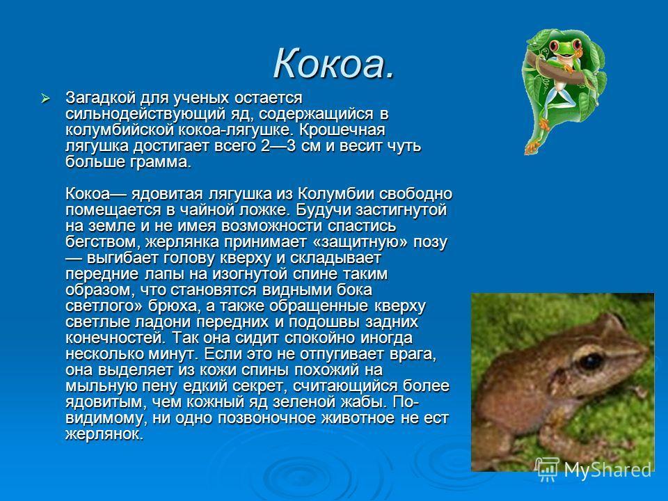 Кокоа. Загадкой для ученых остается сильнодействующий яд, содержащийся в колумбийской кокоа-лягушке. Крошечная лягушка достигает всего 23 см и весит чуть больше грамма. Кокоа ядовитая лягушка из Колумбии свободно помещается в чайной ложке. Будучи зас