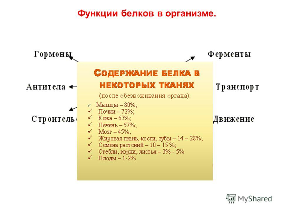 Функции белков в организме.