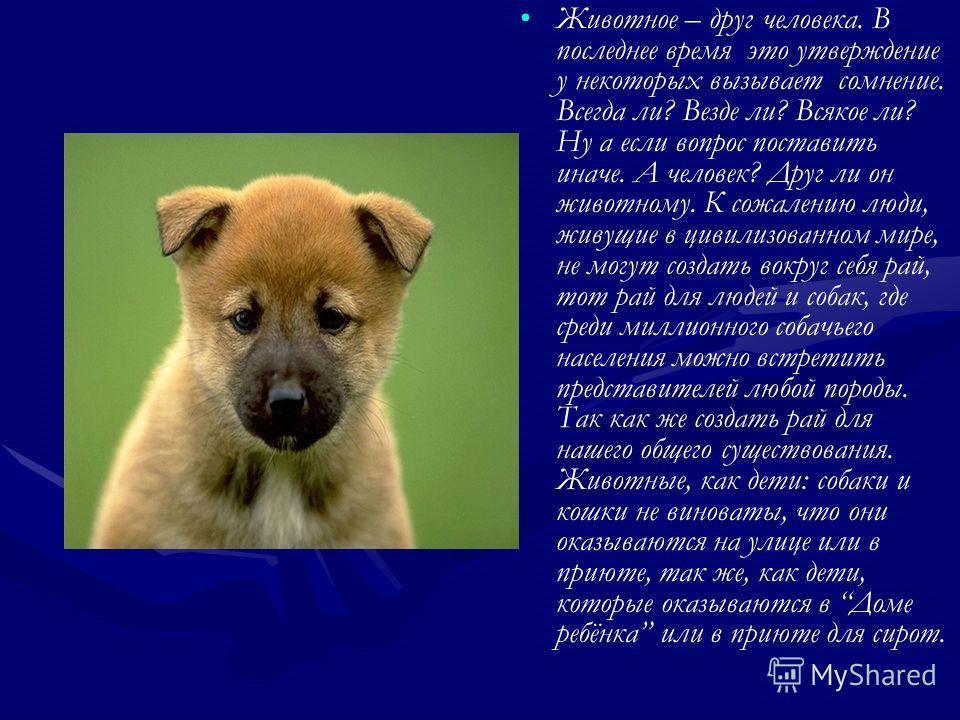««Отношение людей к бездомным животным - самый простой и наглядный показатель гуманности и цивилизованности общества»