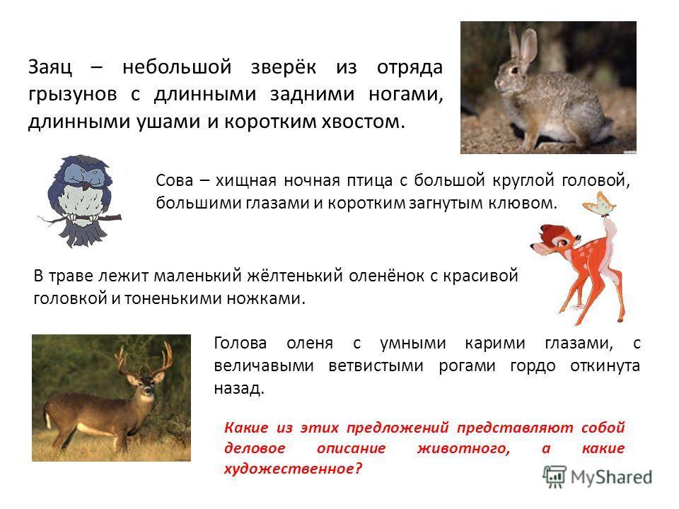 Заяц – небольшой зверёк из отряда грызунов с длинными задними ногами, длинными ушами и коротким хвостом. Сова – хищная ночная птица с большой круглой головой, большими глазами и коротким загнутым клювом. В траве лежит маленький жёлтенький оленёнок с