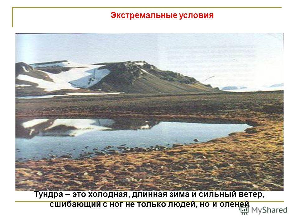 Экстремальные условия Тундра – это холодная, длинная зима и сильный ветер, сшибающий с ног не только людей, но и оленей