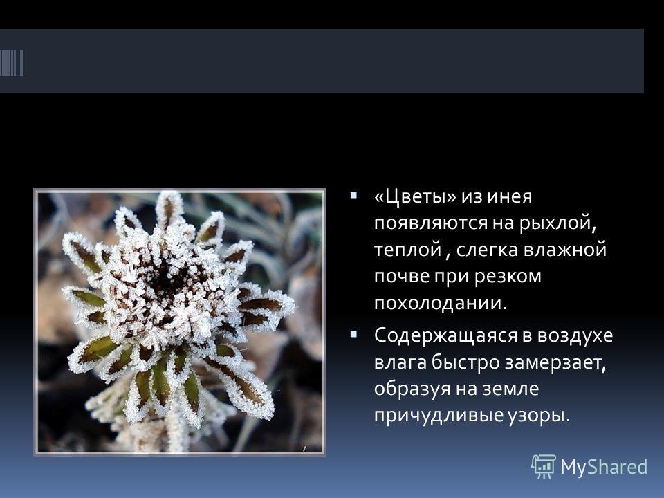 «Цветы» из инея появляются на рыхлой, теплой, слегка влажной почве при резком похолодании. Содержащаяся в воздухе влага быстро замерзает, образуя на земле причудливые узоры.