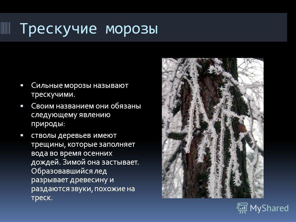 Трескучие морозы Сильные морозы называют трескучими. Своим названием они обязаны следующему явлению природы: стволы деревьев имеют трещины, которые заполняет вода во время осенних дождей. Зимой она застывает. Образовавшийся лед разрывает древесину и