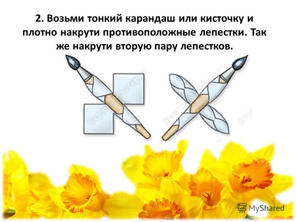 2. Возьми тонкий карандаш или кисточку и плотно накрути противоположные лепестки. Так же накрути вторую пару лепестков.
