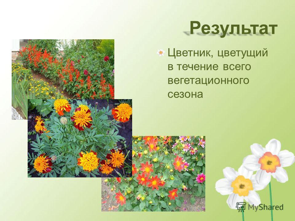 Результат Цветник, цветущий в течение всего вегетационного сезона