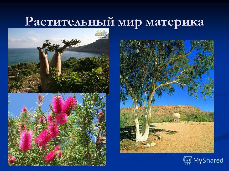 Растительный мир материка