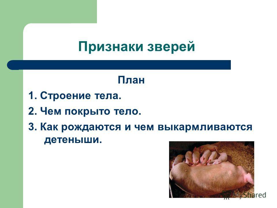 Признаки зверей План 1. Строение тела. 2. Чем покрыто тело. 3. Как рождаются и чем выкармливаются детеныши.
