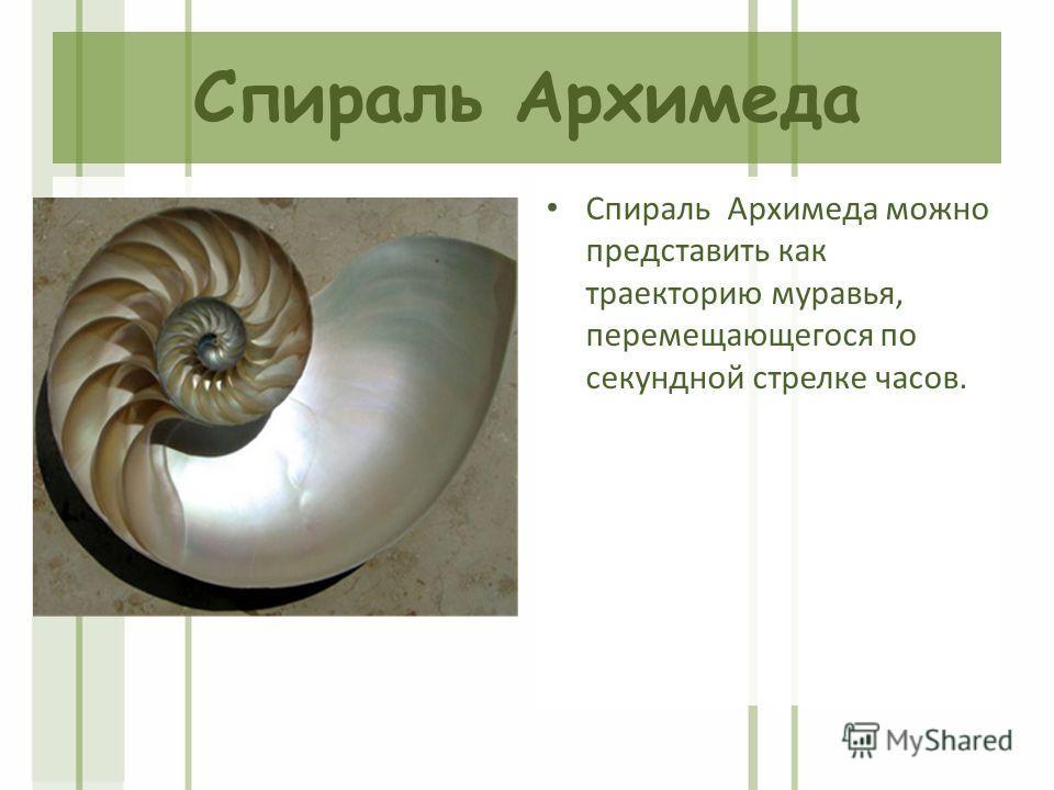 Cпираль Архимеда Спираль Архимеда можно представить как траекторию муравья, перемещающегося по секундной стрелке часов.