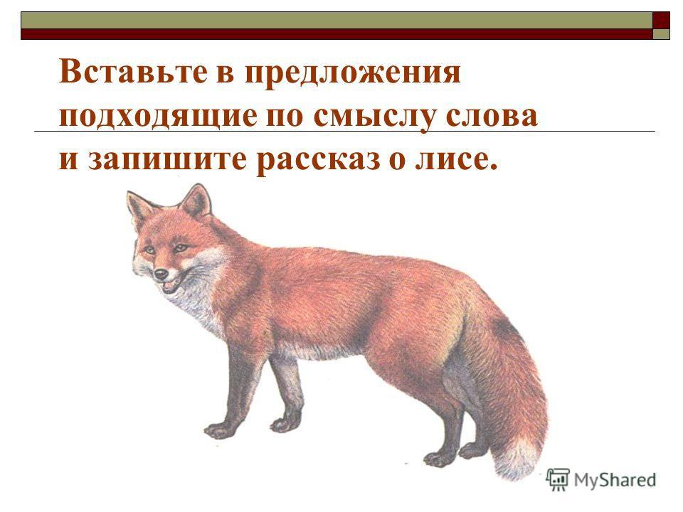 Вставьте в предложения подходящие по смыслу слова и запишите рассказ о лисе.