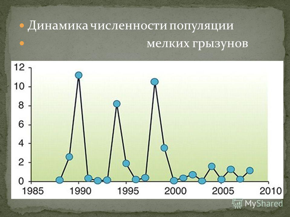 Динамика численности популяции мелких грызунов