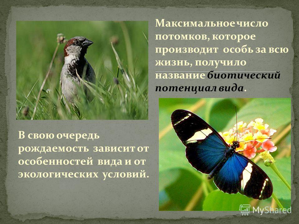 В свою очередь рождаемость зависит от особенностей вида и от экологических условий. Максимальное число потомков, которое производит особь за всю жизнь, получило название биотический потенциал вида.