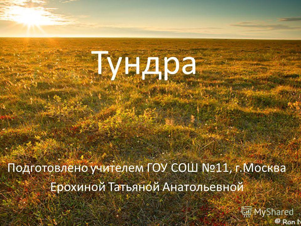 Тундра Подготовлено учителем ГОУ СОШ 11, г.Москва Ерохиной Татьяной Анатольевной
