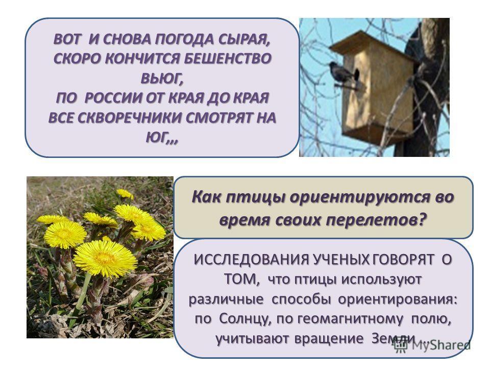 ВОТ И СНОВА ПОГОДА СЫРАЯ, СКОРО КОНЧИТСЯ БЕШЕНСТВО ВЬЮГ, ПО РОССИИ ОТ КРАЯ ДО КРАЯ ВСЕ СКВОРЕЧНИКИ СМОТРЯТ НА ЮГ,,, Как птицы ориентируются во время своих перелетов? ИССЛЕДОВАНИЯ УЧЕНЫХ ГОВОРЯТ О ТОМ, что птицы используют различные способы ориентиров