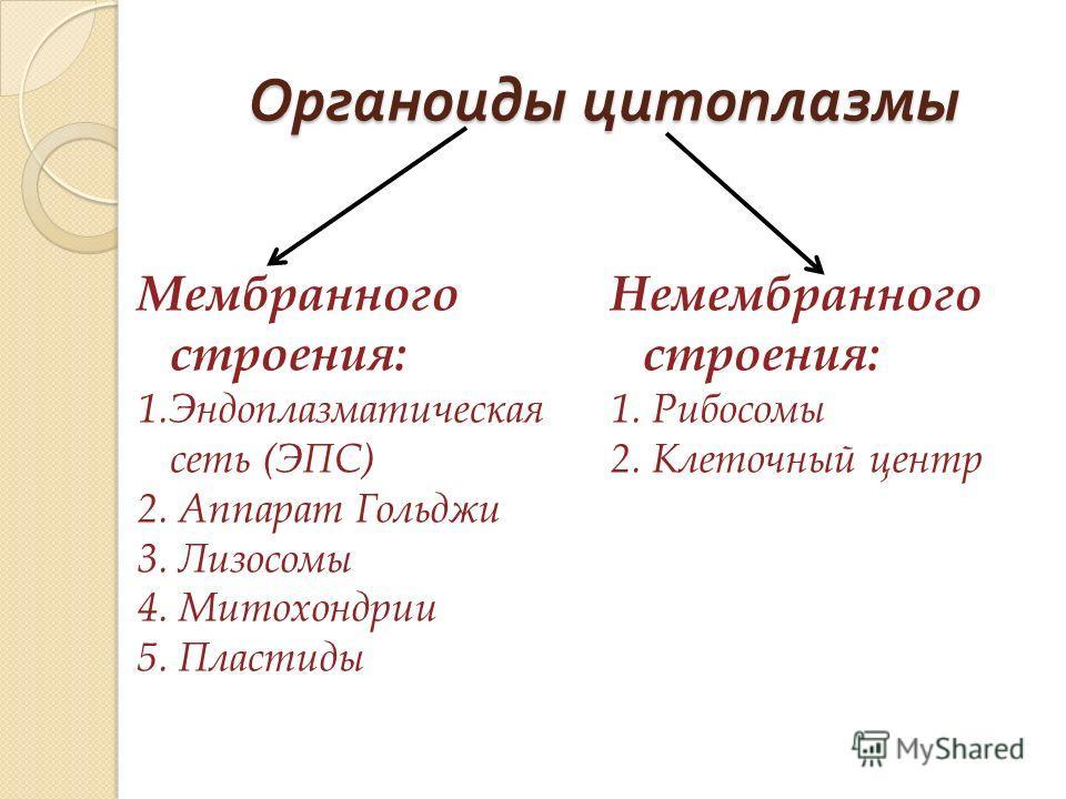 Органоиды цитоплазмы Мембранного строения: 1.Эндоплазматическая сеть (ЭПС) 2. Аппарат Гольджи 3. Лизосомы 4. Митохондрии 5. Пластиды Немембранного строения: 1. Рибосомы 2. Клеточный центр