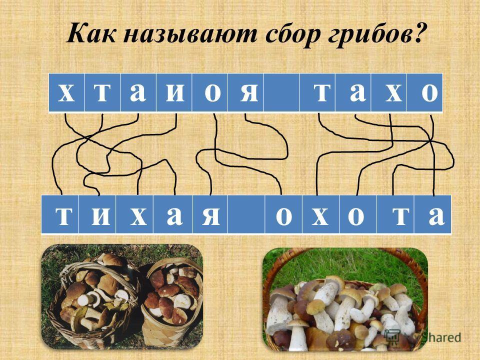 х т а и о я т а х о т и х а я о х о т а Как называют сбор грибов?