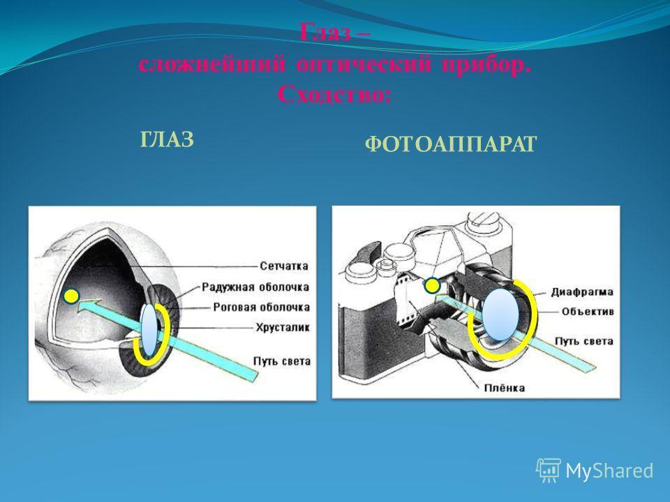 Глаз – сложнейший оптический прибор. Сходство: ГЛАЗ ФОТОАППАРАТ