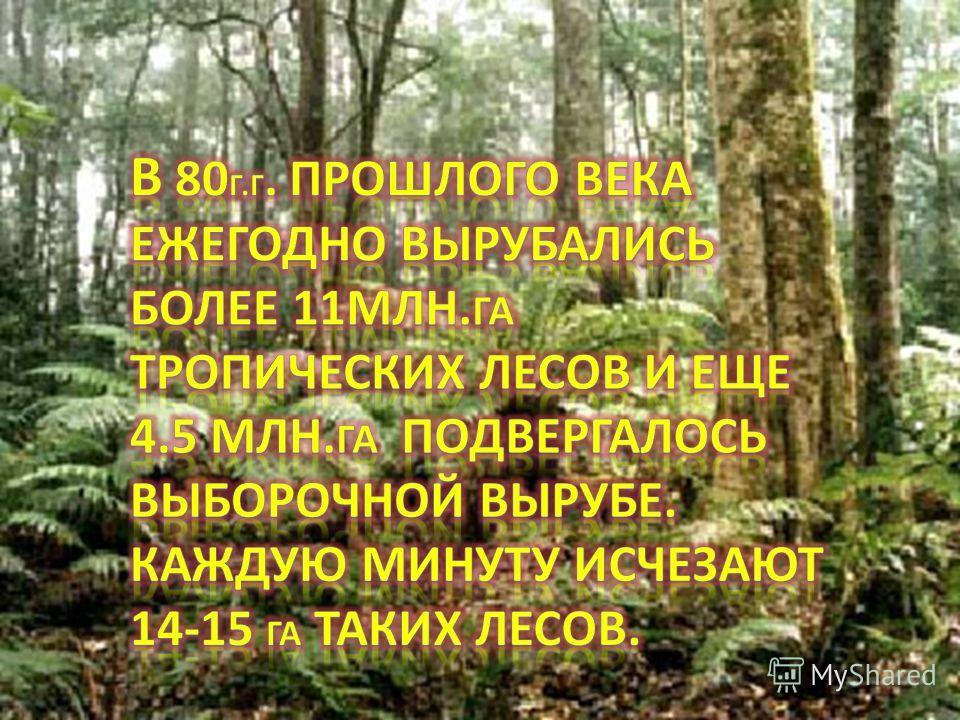 Подсчитано что один человек за свою жизнь «изводит» примерно 200 деревьев- на жилище, мебель, игрушки, спички и т.д. Только в виде спичек жители планеты сжигают ежегодно 1.5 м 3 древесины.