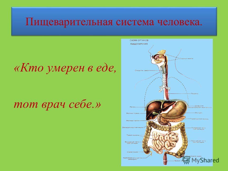 Пищеварительная система человека. «Кто умерен в еде, тот врач себе.»