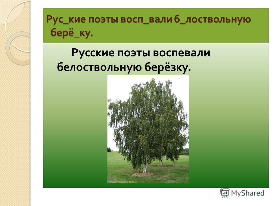 Рус_кие поэты восп_вали б_лоствольную берё_ку. Русские поэты воспевали белоствольную берёзку.