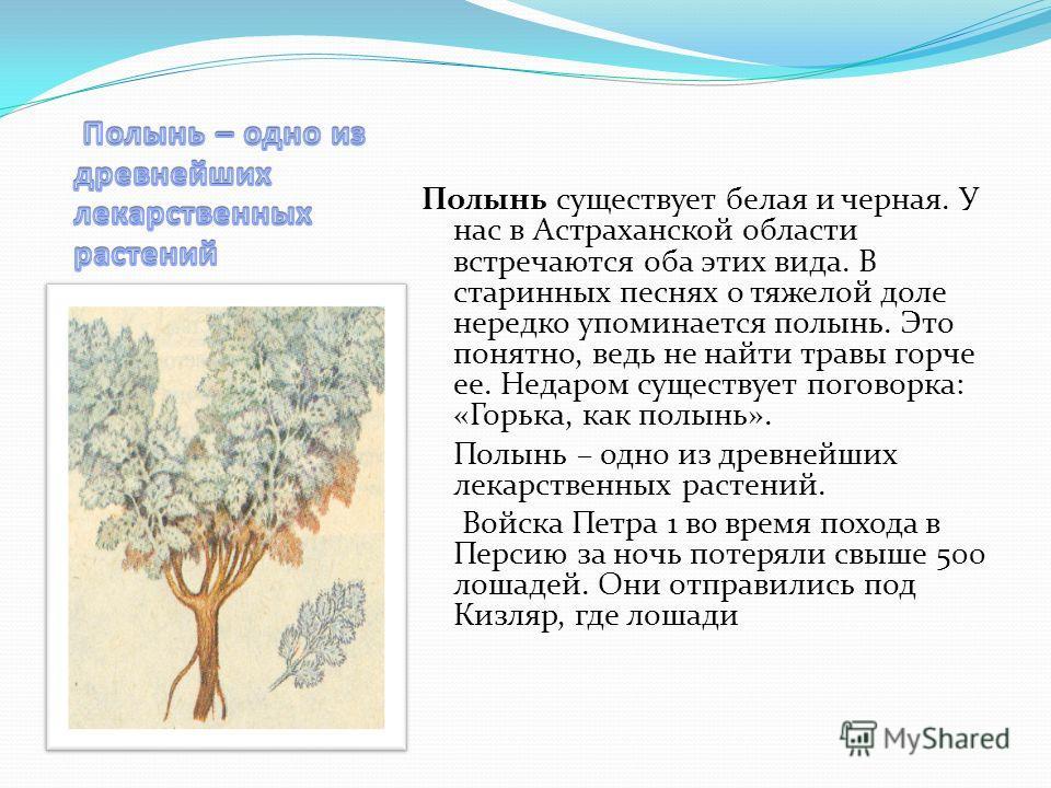 Полынь существует белая и черная. У нас в Астраханской области встречаются оба этих вида. В старинных песнях о тяжелой доле нередко упоминается полынь. Это понятно, ведь не найти травы горче ее. Недаром существует поговорка: «Горька, как полынь». Пол