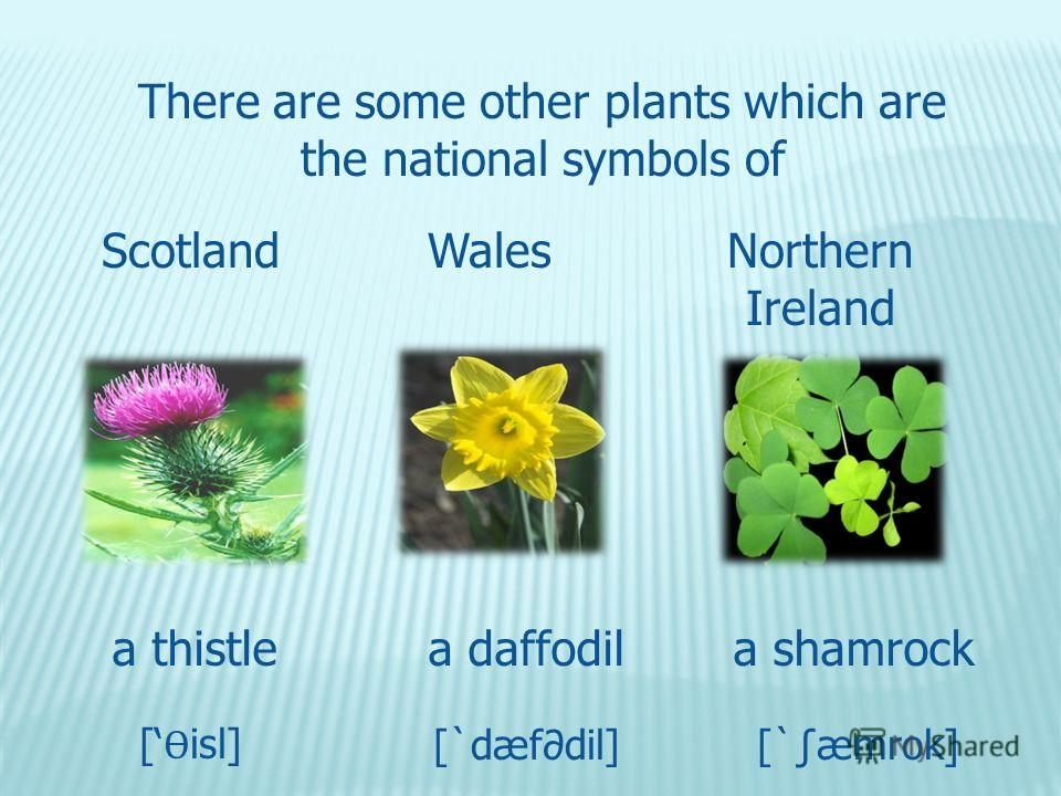 There are some other plants which are the national symbols of ScotlandWalesNorthern Ireland a thistlea daffodila shamrock [ Ѳ isl] [`dæfdil][`æmrok]