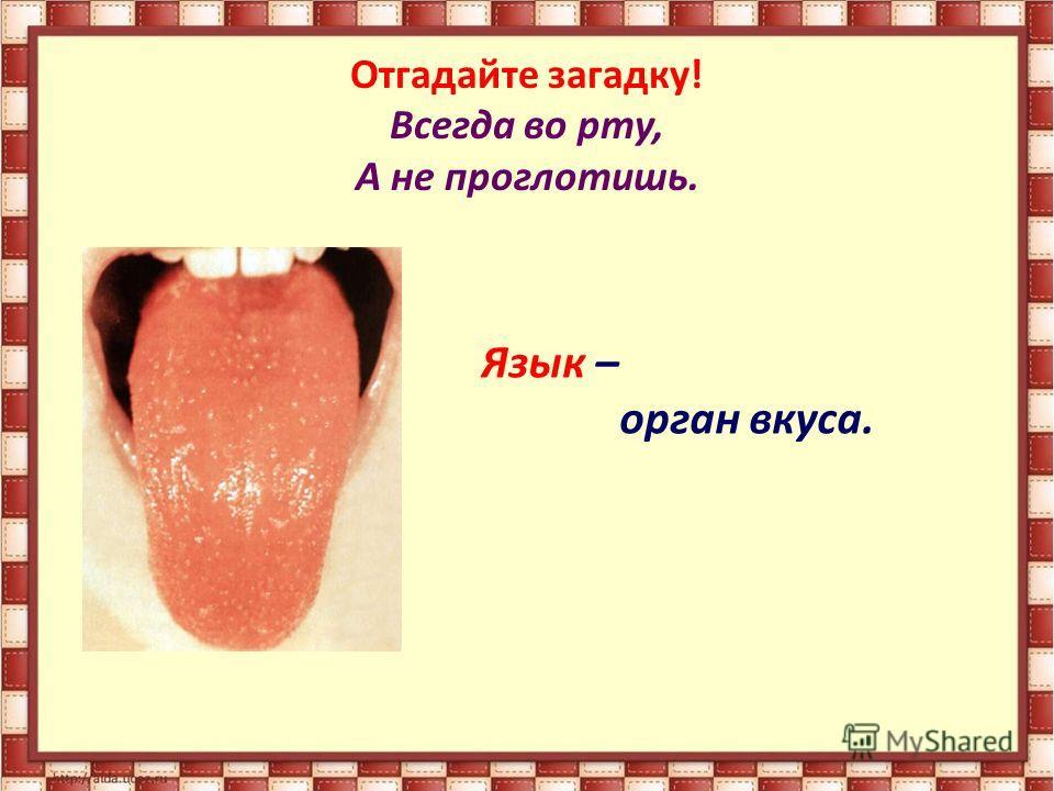 Отгадайте загадку! Всегда во рту, А не проглотишь. Язык – орган вкуса.