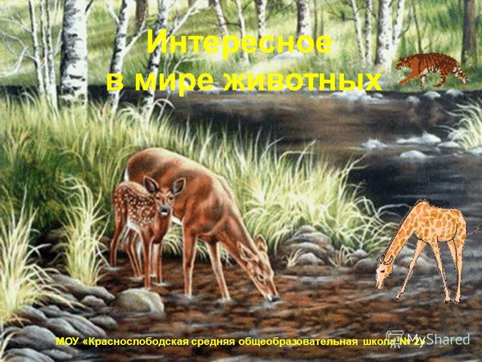 МОУ «Краснослободская средняя общеобразовательная школа 2» Интересное в мире животных