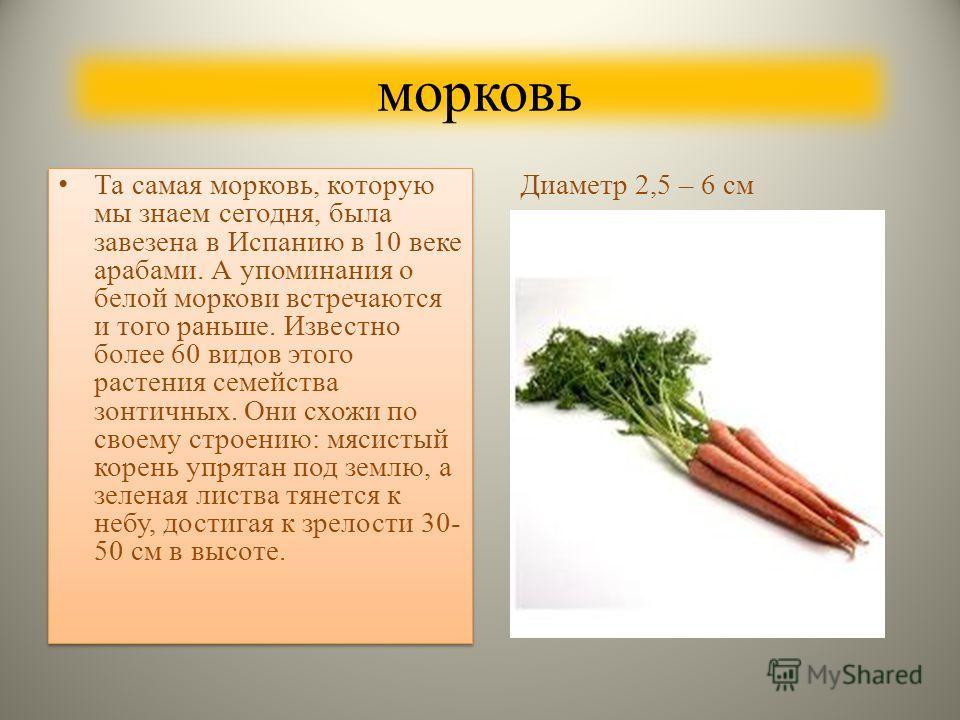 К корнеплодам относятся: морковьсвекла редис Редька дайконрепабрюкваБелые коренья