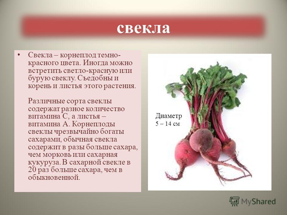ИСПОЛЬЗОВАНИЕ МОРКОВИ В КУЛИНАРИИ гарнирысупы Вторые блюда салаты
