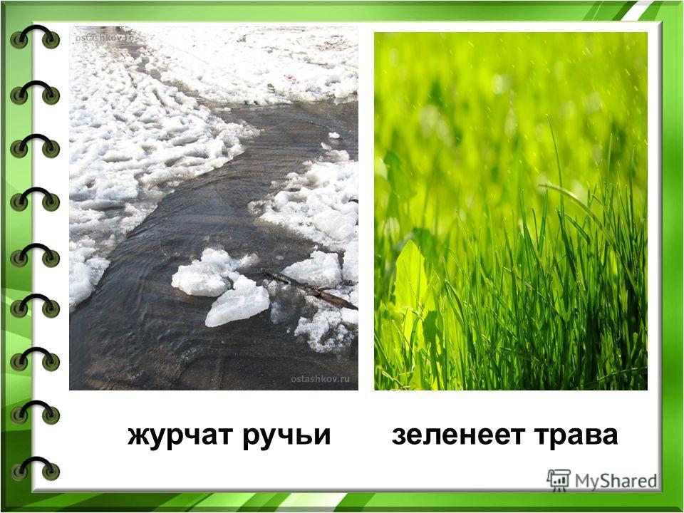 журчат ручьизеленеет трава