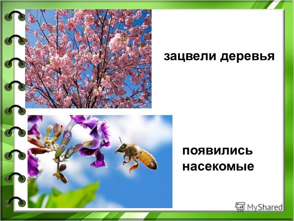 зацвели деревья появились насекомые