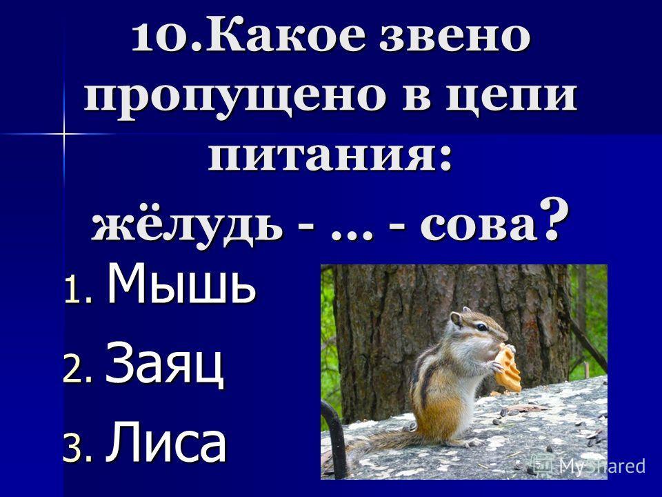 10.Какое звено пропущено в цепи питания: жёлудь - … - сова ? 1. М ышь 2. З аяц 3. Л иса