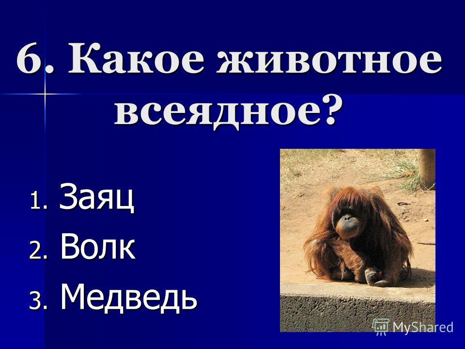 6. Какое животное всеядное? 1. З аяц 2. В олк 3. М едведь