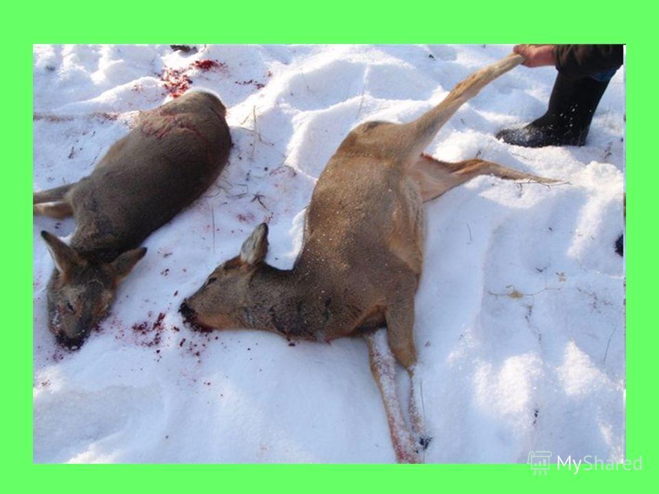 Отстрел животных