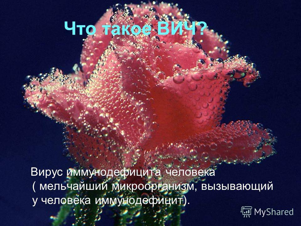 Что такое ВИЧ? Вирус иммунодефицита человека ( мельчайший микроорганизм, вызывающий у человека иммунодефицит).