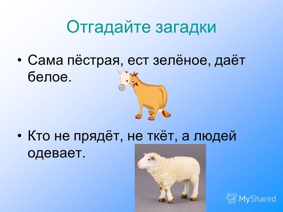 Отгадайте загадки Сама пёстрая, ест зелёное, даёт белое. Кто не прядёт, не ткёт, а людей одевает.
